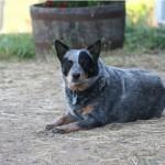 Callie-better