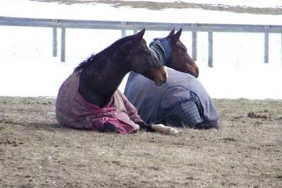 Happy, relaxed horses